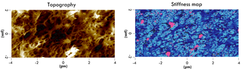 AFM topographical and mechanical image