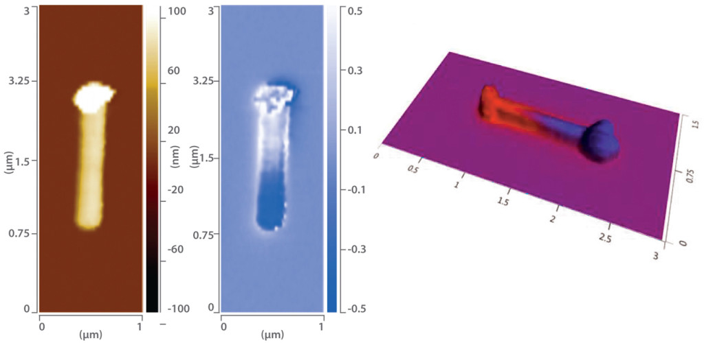 S-SNOM measurement of enhancement/scattering from resonant nanostructures. Topography left and SNOM phase center