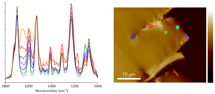 AFM-IR absorption spectra reveal evidence of localized nanoscale oxidation at failure point in polyurethane tubing.